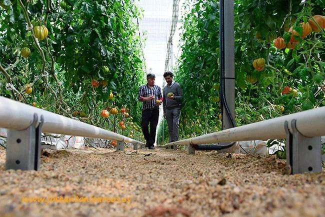 Sistema de calefacción por agua caliente a través de tubo raíl de la empresa Sistemas de Calor, SDC.
