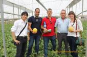 Los nuevos melones de la japonesa Takii