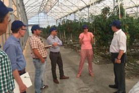 Productores paraguayos de stevia viendo tomates en Almería