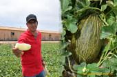 Rijk Zwaan obtiene pieles de sapo para exportar a larga distancia