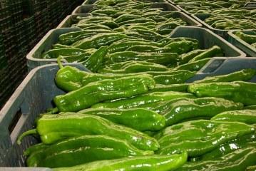 Italia emerge como mercado importador de productos andaluces
