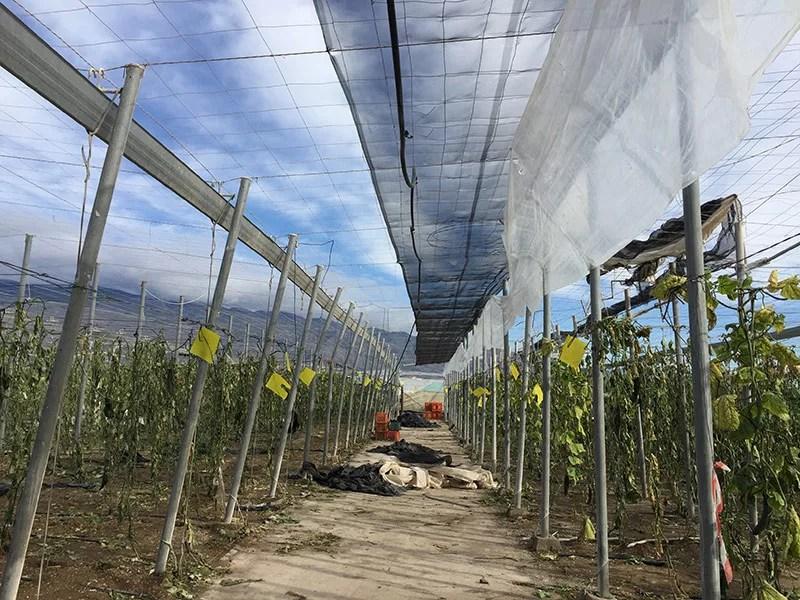 Invernadero de El Ejido destruido por los tornados del día de Reyes de enero de 2018.