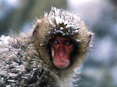 October 22, 2011: Dinners, projects, and Snow Monkeys! | Josephmallozzi's Weblog