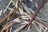 Photo of Catalpa winter droppings