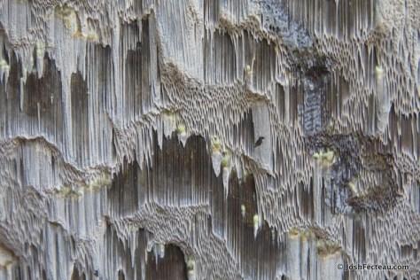Photo of Pore tubes of Chaga fruiting body