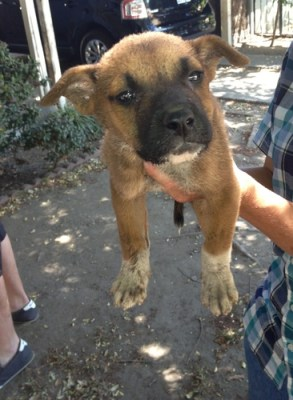 The day Bruno was rescued from South Central LA