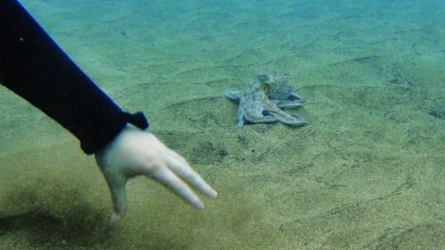 Ах, да, я еще осьминога видела.