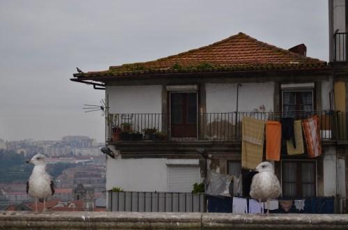жизнь в Порту