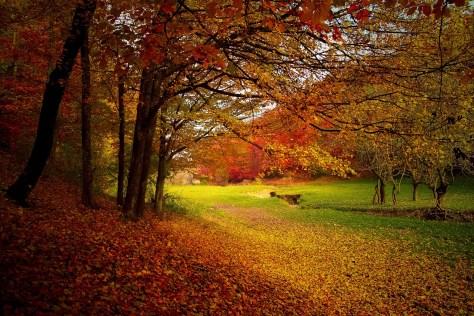 autumn-1072827_1280