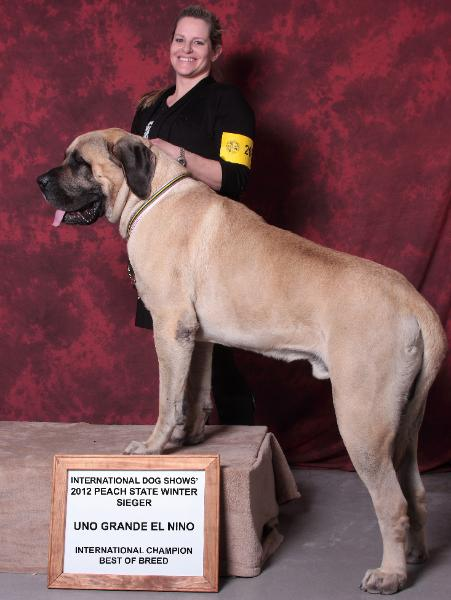 English Mastiff's Get Big.  Really big.