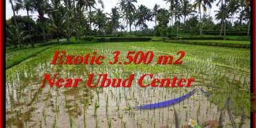 JUAL MURAH TANAH di UBUD BALI 3,500 m2 di Ubud Tegalalang