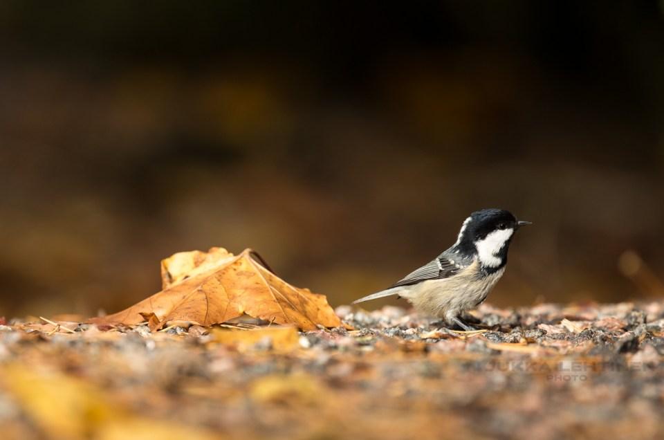 Bird photography at home
