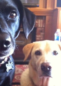 bailey and bella close up