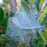 Weekly Photo Challenge: Wonderful spider web