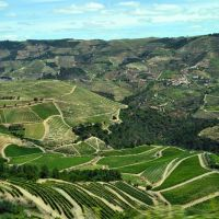 How and when to explore the Douro valley