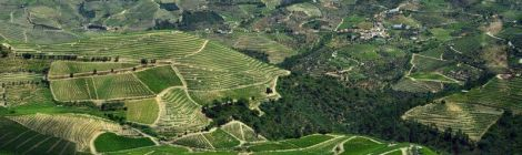 Lined landscapes of the Douro valley, Portugal