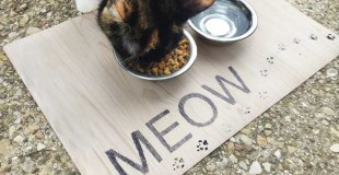 DIY Pet Placemat MEOW