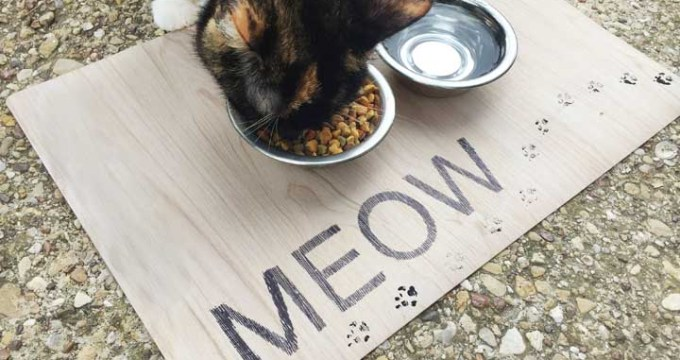 Meow DIY Pet Placemat