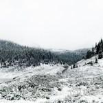 Snowy Summer