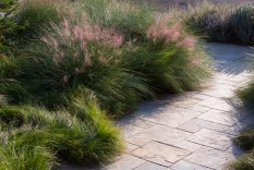 Flowering in early November in Southern California, Muhlenbergia capillaris features airy pink plumes. Carex divulsa (Berkeley Sedge) is in foreground. June Scott Design.