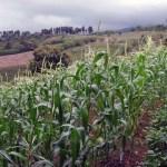 San Luis Organic Farm & Market