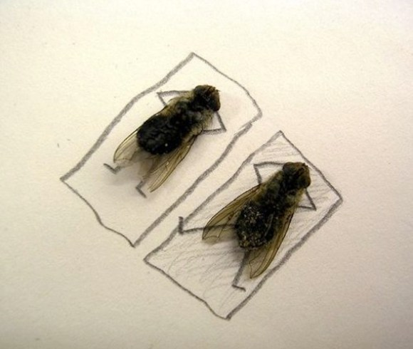 flies being human