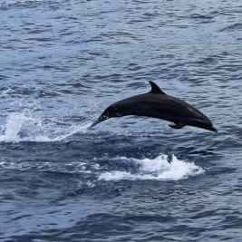 Swimming With Dolphins: The Dark Truth