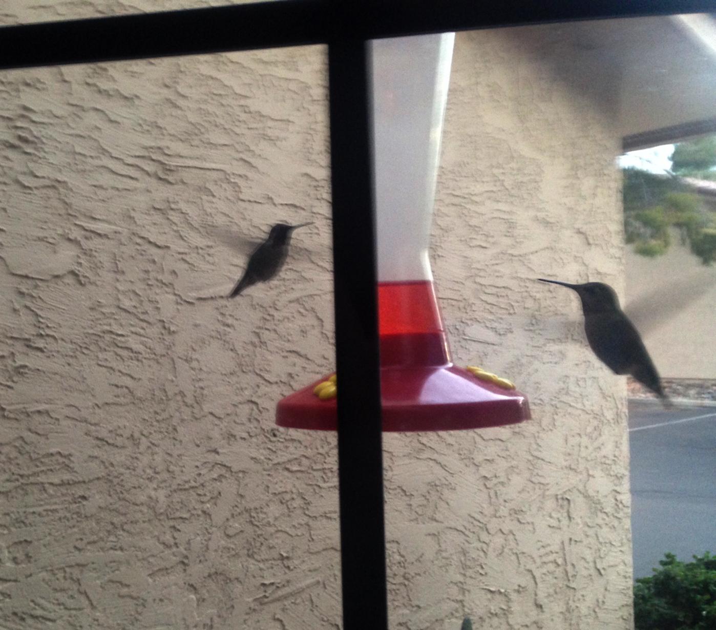 Fullsize Of Walmart Bird Feeders