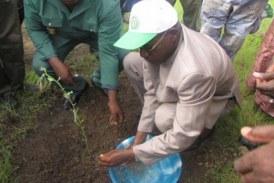 Dabola: C'est parti pour le reboisement des têtes de sources à Fella Hamdallaye