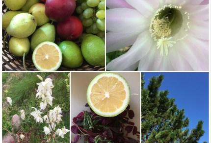 Eksotisk have og frugt