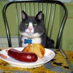 Как правильно ухаживать за кошкой?