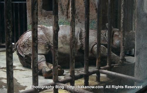 Rhinoceros in the Beijing Zoo, China. Photo by KaKa.