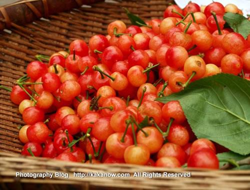 China travel, Chongqing, the local cherry. Photo by KaKa.