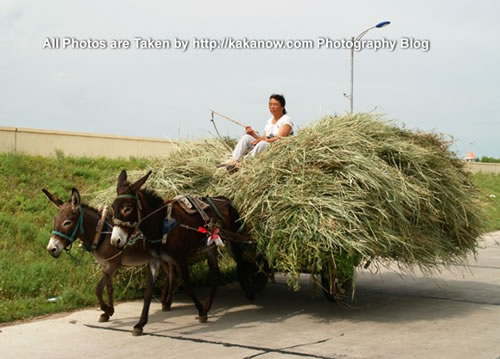 China travel, Inner Mongolia, Horqin, Donkey cart. Photo by KaKa.