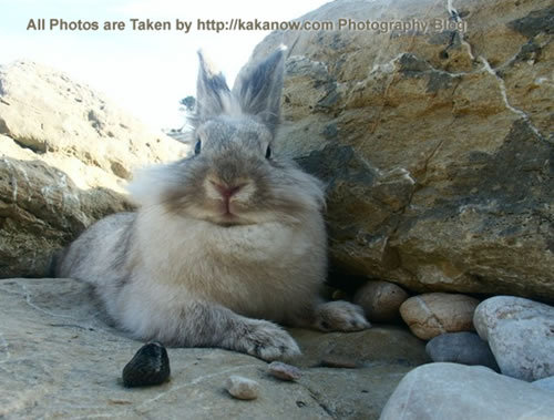 France, Marseille, rabbit Lapinpin and a small conch at the seaside of Les Calanques. Photo by KaKa.