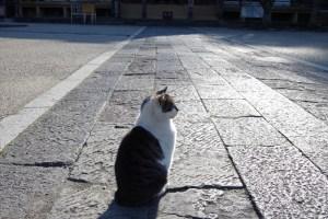 bohe【猫のいる風景】4-2