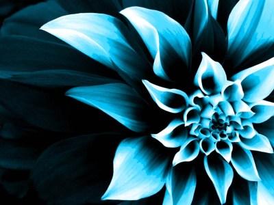 Flower-Wallpaper COLOR CHANGE   kamishadjones
