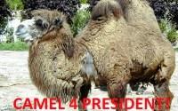 Elnököt, vagy Ádert?