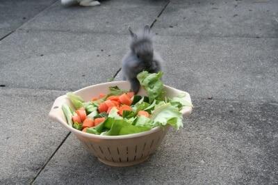 Kaninchen Ernährung