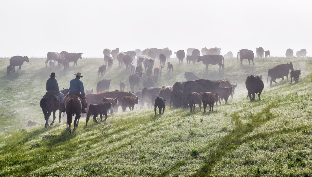 fh_cattle_drive_9466c_med