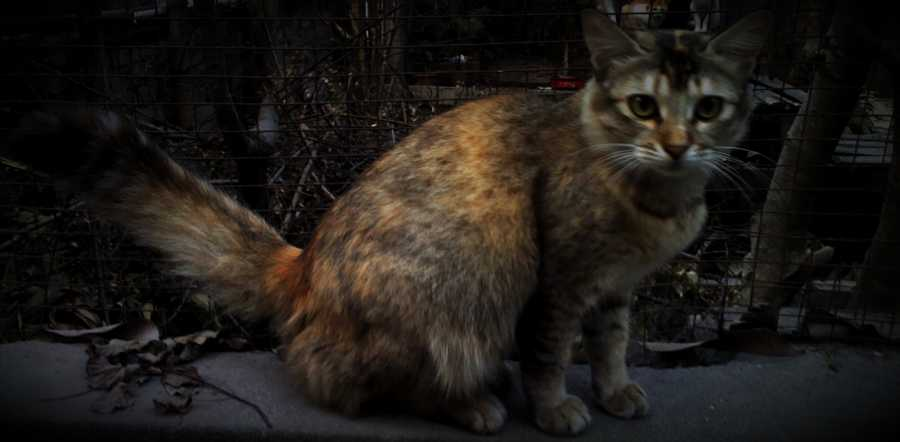 Cat Litter-Strip Mining-Environment
