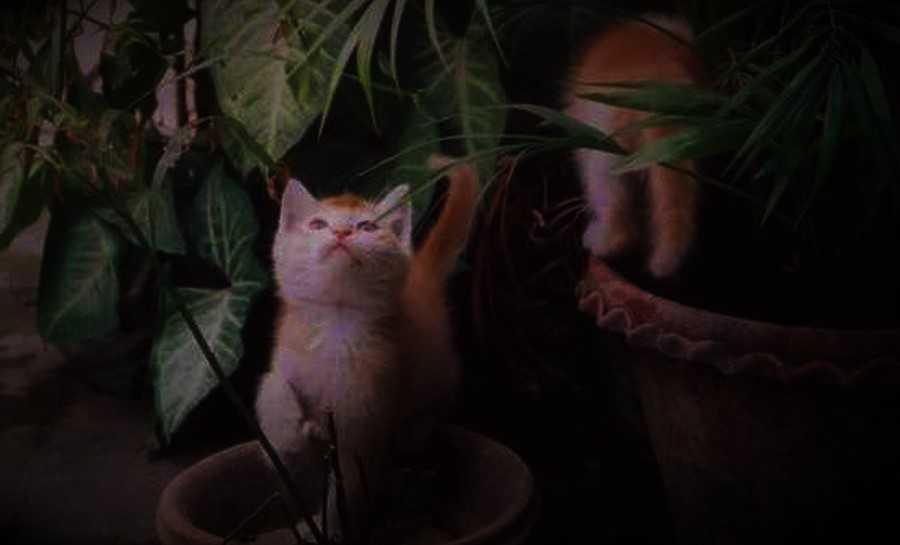 organic cat litter keeps kittens safe