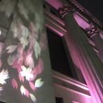 日本橋さくらフェスティバルで幻想的な桜に感動