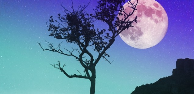 月星座同士の相性って大事