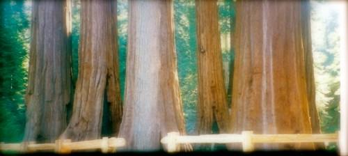 Sequoia National Park, CA - 1999