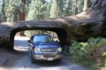 driving your car through a tree, snp,