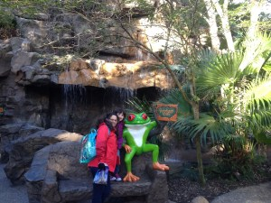 wdw, disneyworld, restaurant, disney dining, rainforest cafe frog