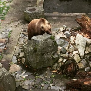 Oddly enough, a bear pit in the moat of the castle?