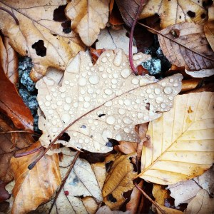 Wet leaves, stunning with dew drops.