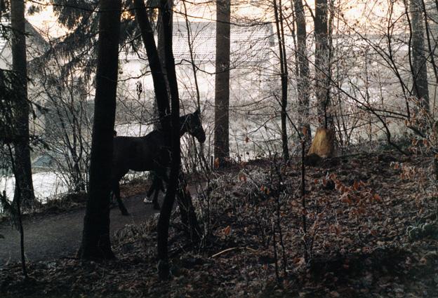 Karin-Mueller-Pferd-Wald